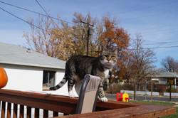 Cat walking the railing