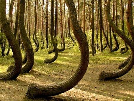 The Haunted, Alien Hotspot, Dimensional Portal Forest of Hoia-Baciu