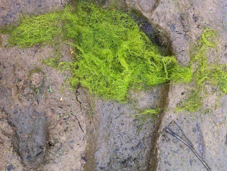 BIGFOOT TRACK FOUND IN EAST TEXAS