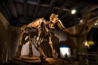 Museum Nature Science Woolly Mammoth