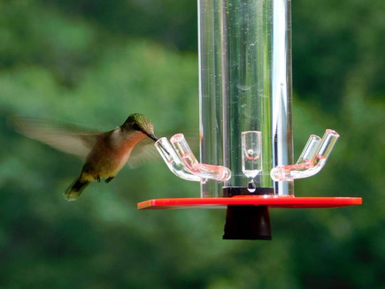 hummingbird-feeder-royalty-free-image-85