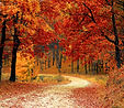 fall-autumn-red-season_large.jpg