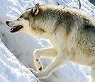 Hungry Hunting.jpg