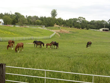 Horse Riding Omaha, NE
