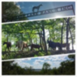 Shady Lane Ranch | Horses