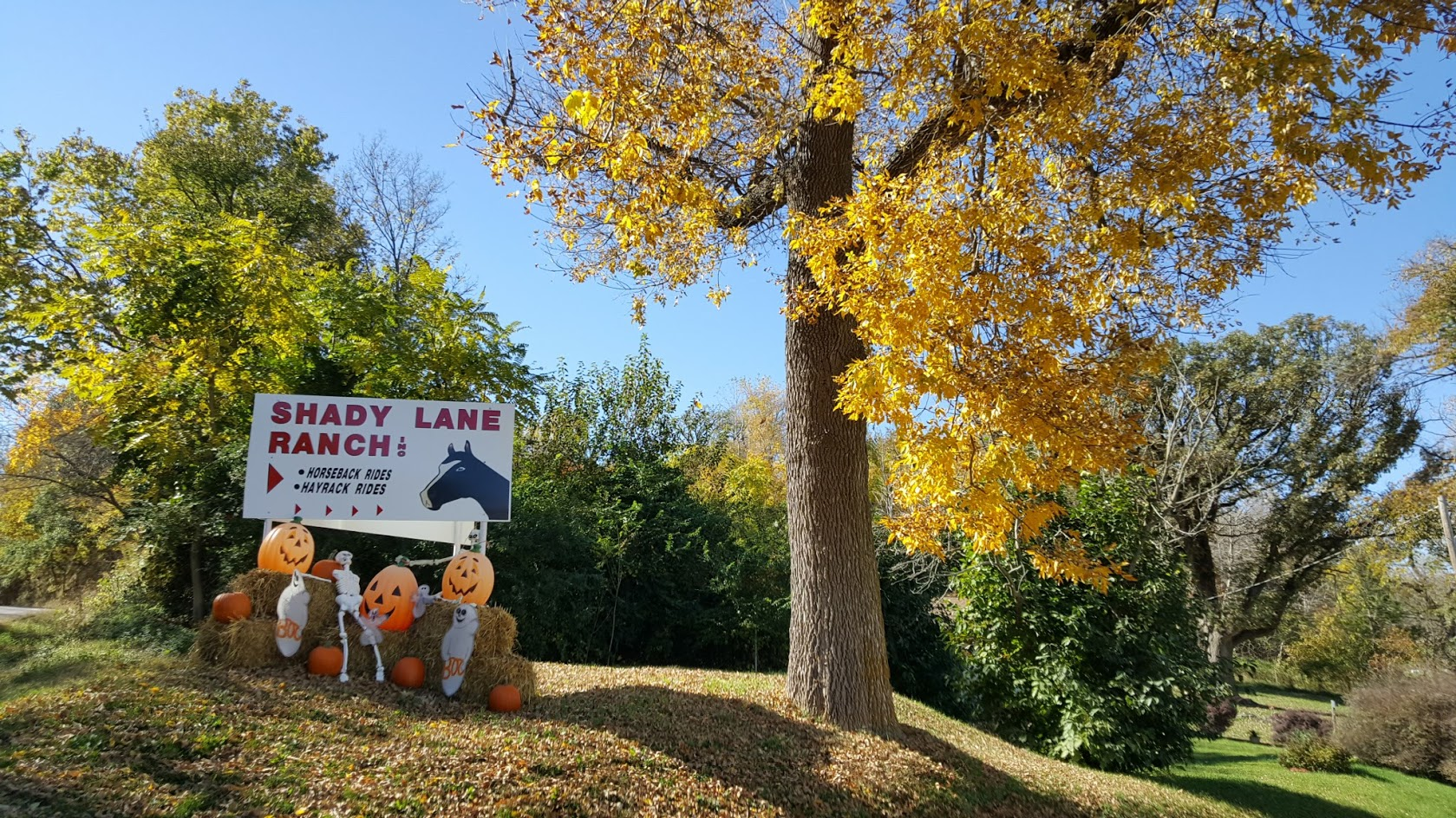 Shady Lane Ranch Council Bluffs