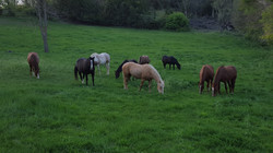 HorsesFb5.26.15