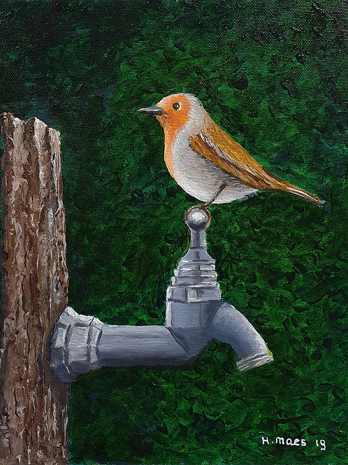 Robin on watertap