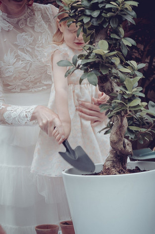 rituel-arbre-ceremonie-laique.jpg