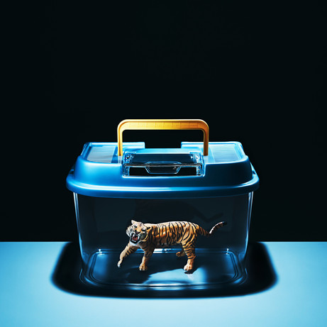 DAJARECORD「虎を捕らえる」