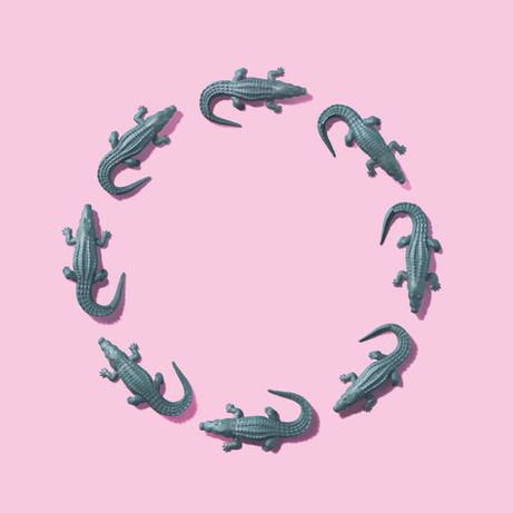 DAJARECORD「ワニが輪になる」