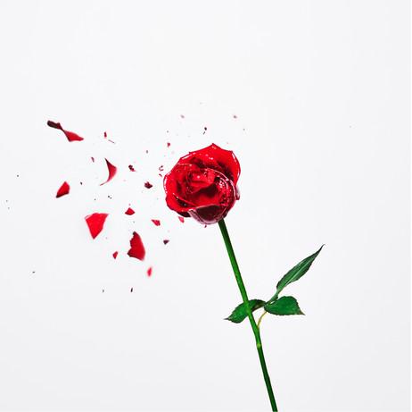DAJARECORD「バラがバラバラ」