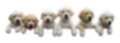 4014285-image-puppies-climbing-transpare