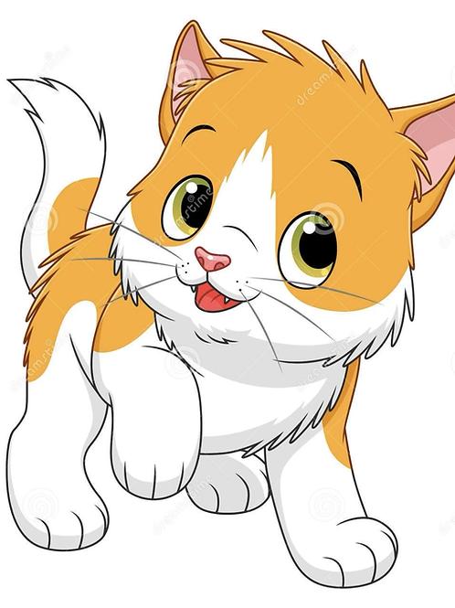 Kitten Adoption Fee
