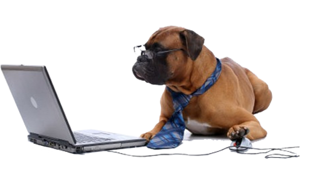 dog_pc.png