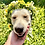 Thumbnail: Freya