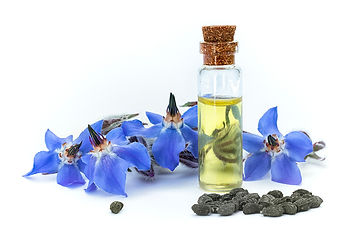 Borage-Oil.jpg