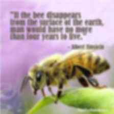 Bee quote.jpg