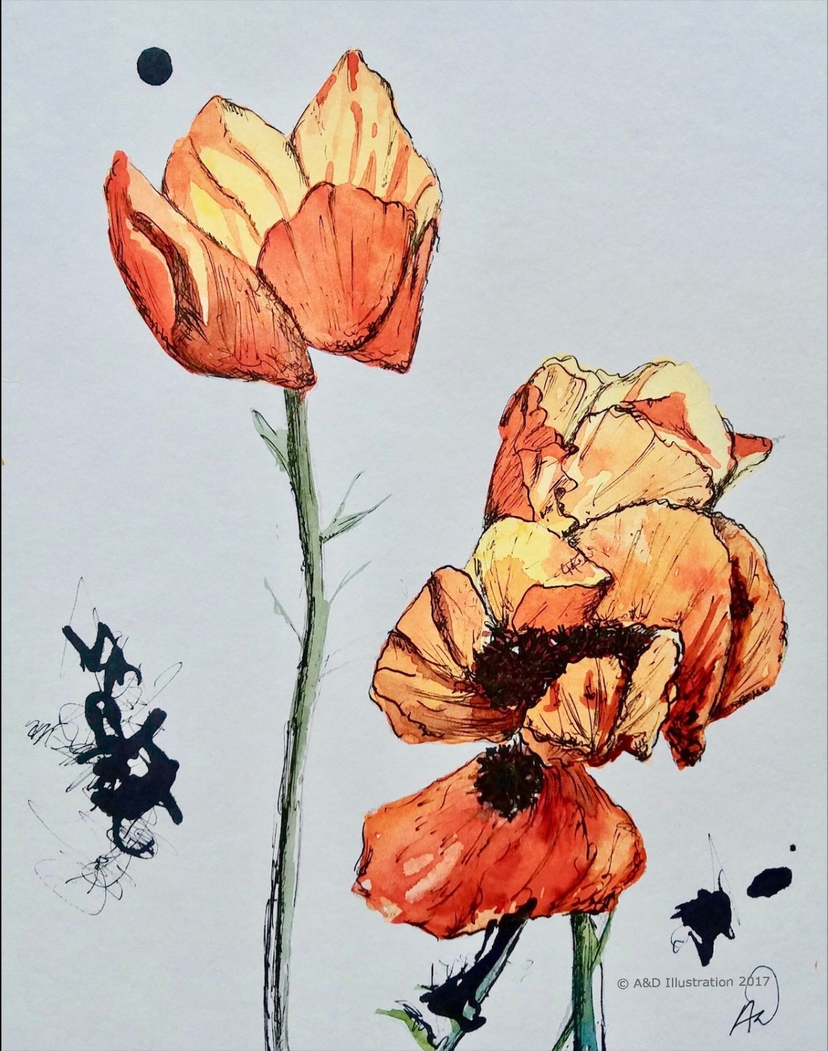 """Poppies"" watercolor & ink by D&A Illustration"