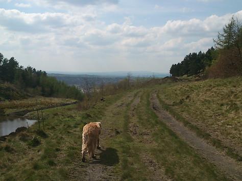 lovely sunshine walk