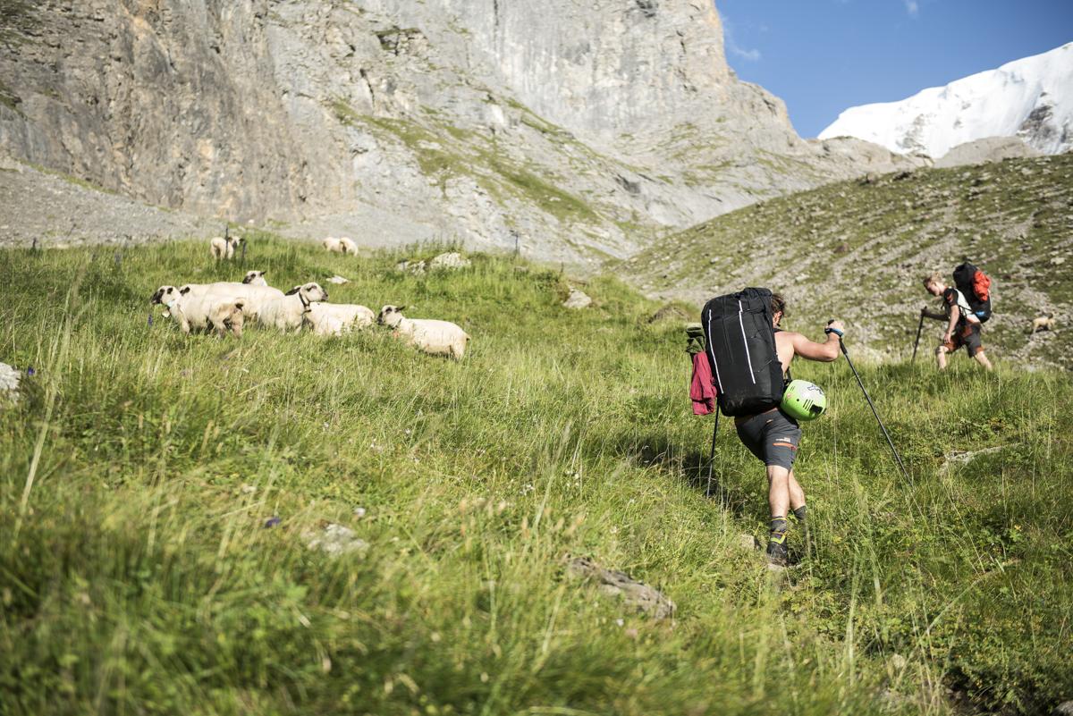 Swiss.alps.mountaineering