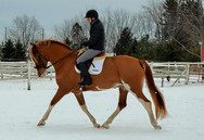 Foxy - Started, trained, and sold