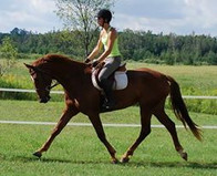 Kyra - bred, started, trained and shown