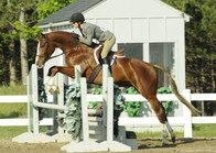 Ferra - Trained, showed Baby and Pre Green Hunters