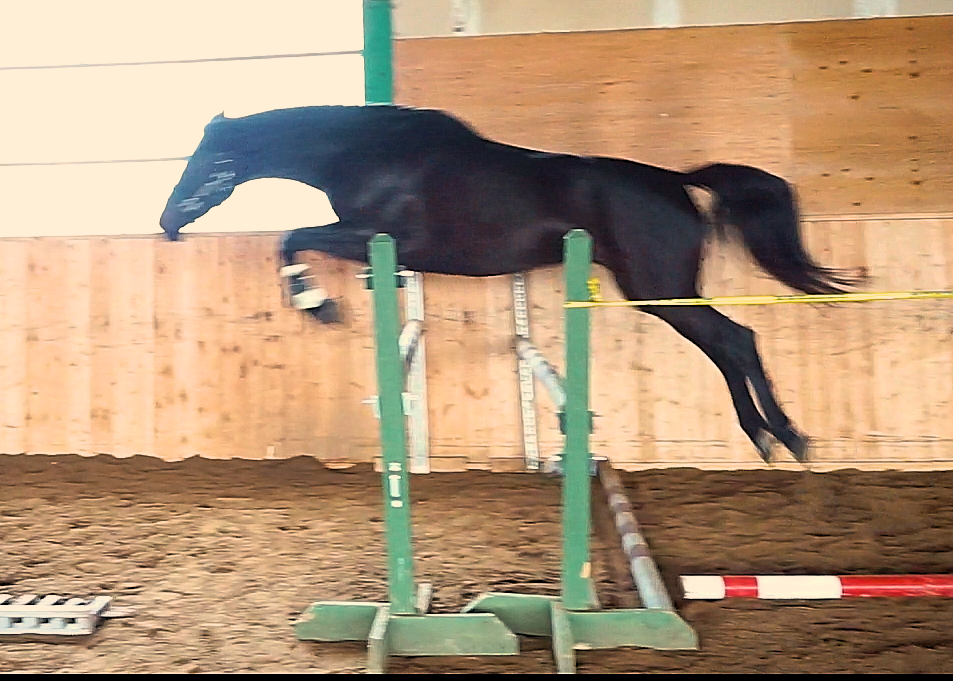 Steeped in Gold Free Jump Jan 2019