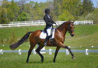 Tangerine Tango - Trained and shown to Prelim