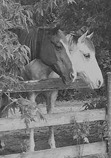 HORSE_edited.jpg
