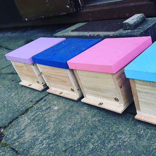 Bienenvolk im Miniplus