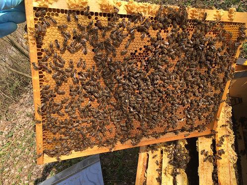 Bienenvolk Dadant Blatt