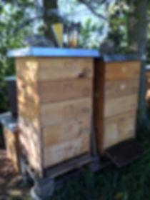 Dadant, Hongraum, Honig, angepasster Brutraum, Thermoshied, Wärmeschied, Buckfast Bees, Carnica Bienen