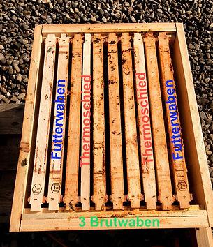 angepasster Brutraum, Buckfast Zürich, Buckfast Schweiz, Thermoschied, Futterwabe, Brutwabe