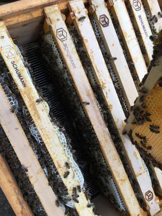 Honig in der Wabe