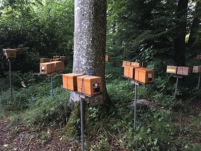 Honig Niederhasli, Bienenhaus Niederhasli, beejmarc, Siegelimker Marc Schumann, Imkerei Schumann