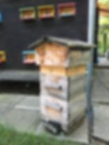 Honig Niederhasli, Bienenhaus Niederhasli, beejmarc, Siegelimker Marc Schumann, Imkerei Schumann, Bienenhaus Schwenkelberg