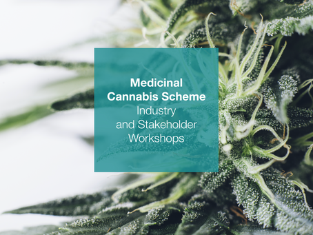Medicinal cannabis workshops shine light on licensing for industry