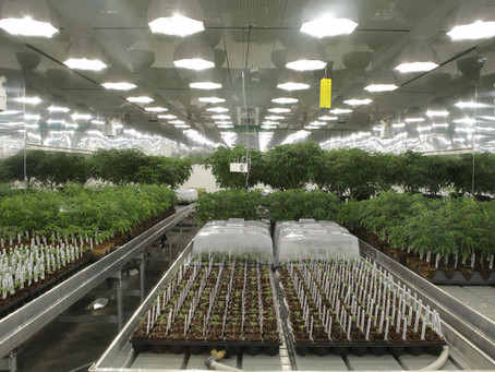 Cannabis companies on pace to raise record $8 billion in 2018