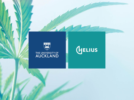 University of Auckland and Helius are mapping medicinal cannabis journeys in New Zealand