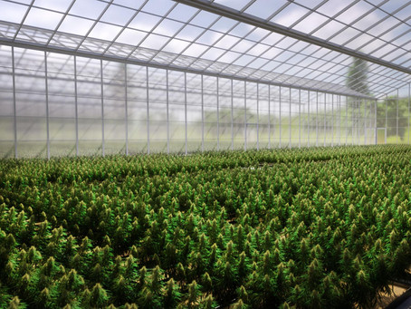 Helius acquires 10,000sqm hydroponic greenhouse in Kumeu for cultivating high CBD cannabis