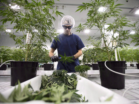 Constellation invests industry-record $5b in cannabis giant