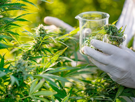 Have your say on new rules for medicinal cannabis