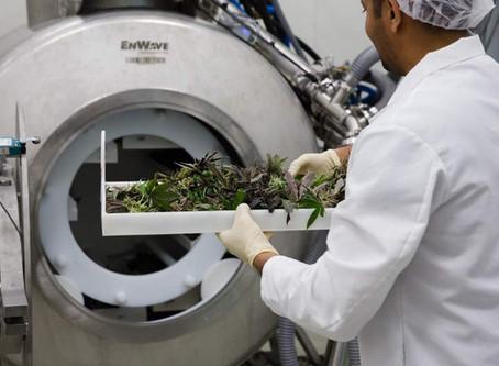 EnWave tech helps Helius unlock new medicinal cannabis opportunities
