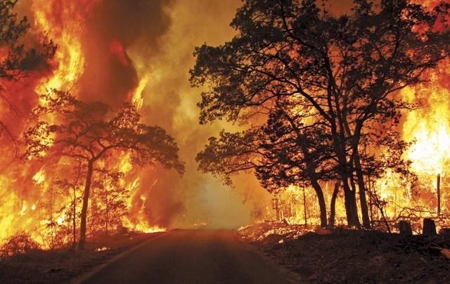 Firestorm Trees Burning