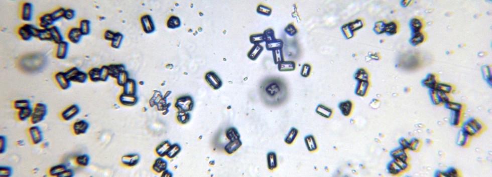 Ice Crystal Replicas