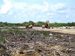 Mangrove Clearing.jpg