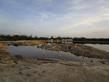 Mangrove Floods.jpg