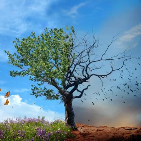 When Sacredness Becomes Exploited